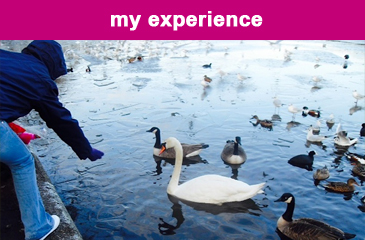 my-experience copy1